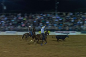cowboys roping a steer