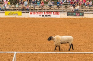 mutton at rodeo