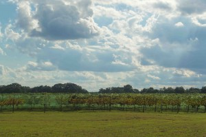 texas vineyards