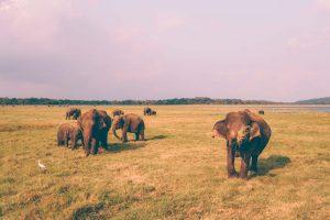 kaudulla national park safari