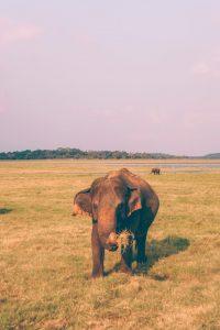 kaudulla park safari
