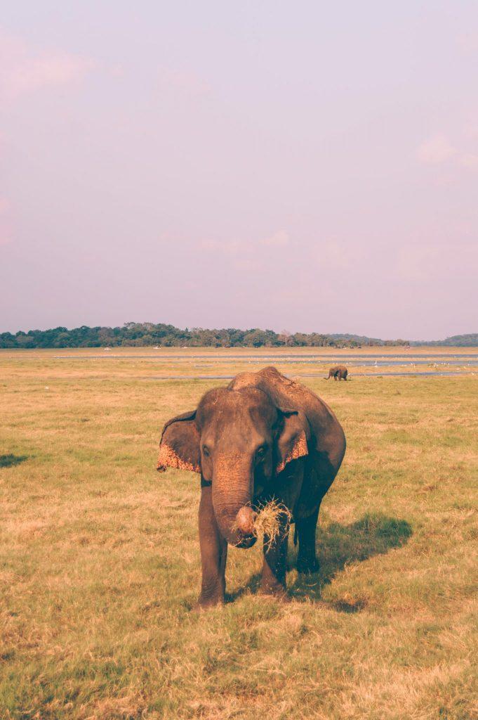 парк каудулла слоны