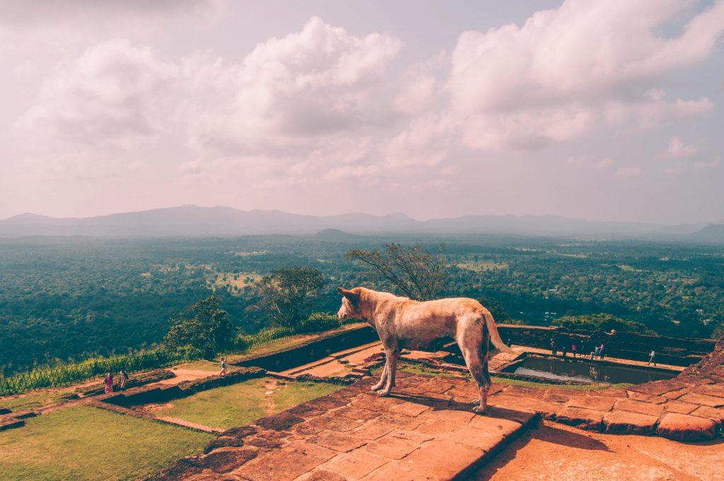 sigiriya climb