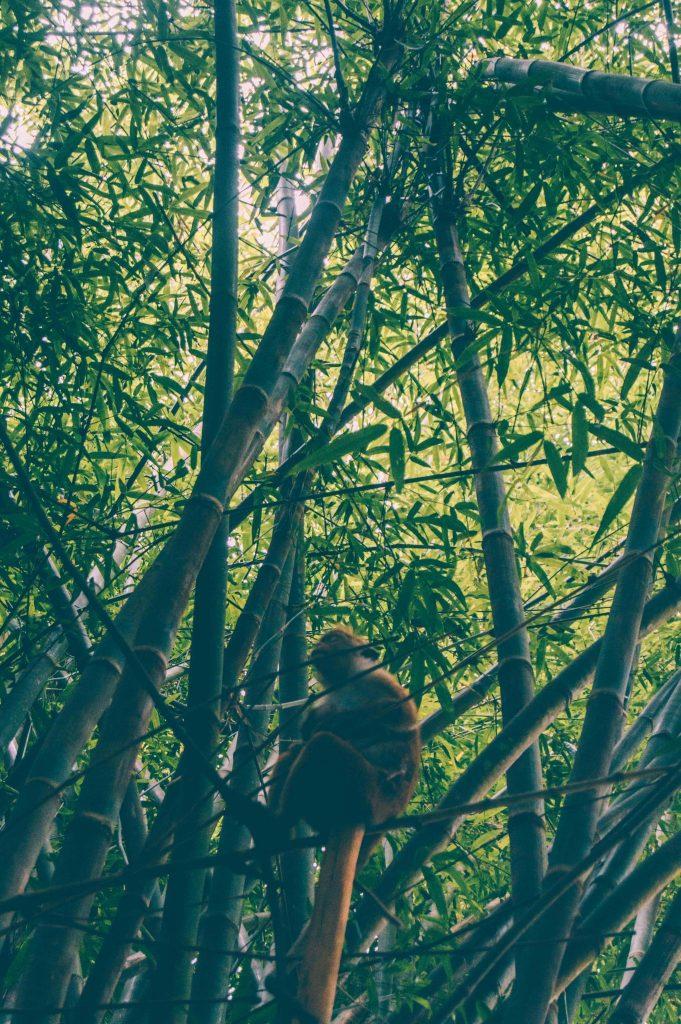 ботанический сад нерадения шри ланка