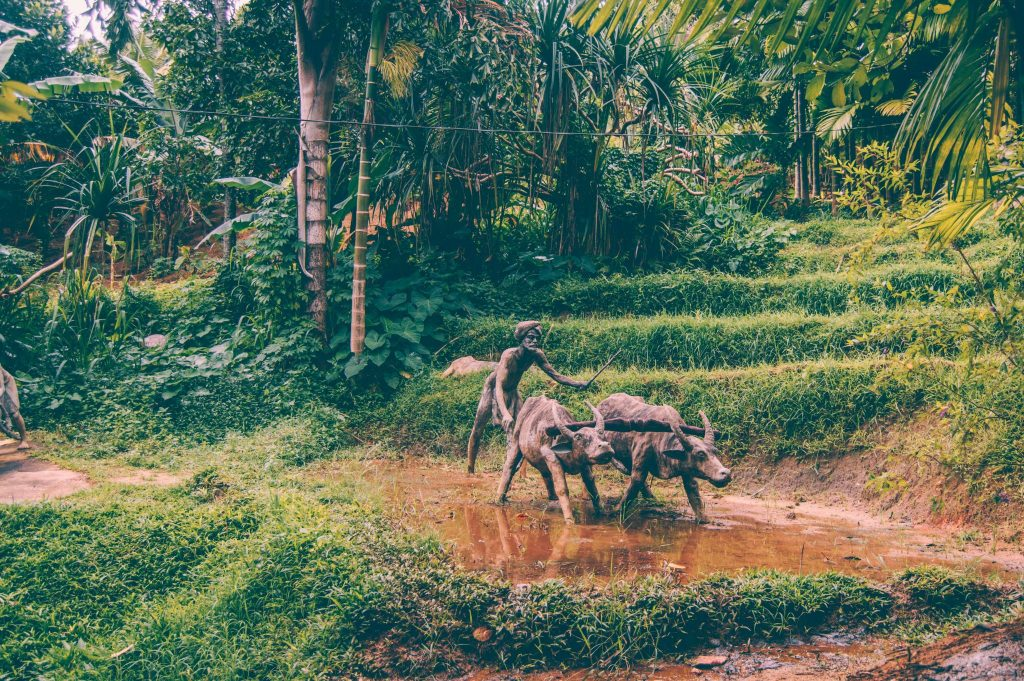saradiel village kandy