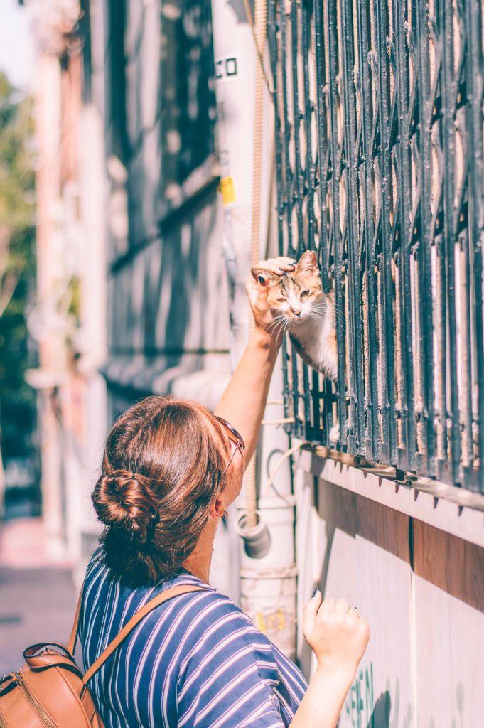 istanbul-cat-city
