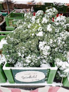 kale-winter