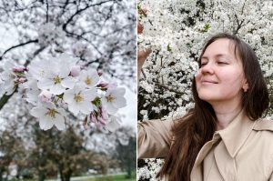 spring-bloom-collage